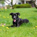 Ensuring Your Pet's Safety and Well-Being This Spring
