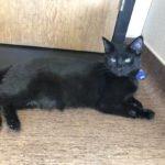 Peninsula Pet of the Week: Black Widow