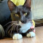 Peninsula Pet of the Week: Canasta