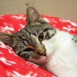 Peninsula Pet of the Week: Fanta