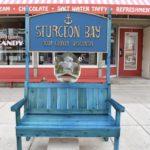 Sturgeon Bay's Bench Invasion