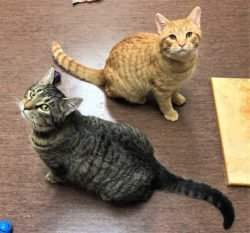 Peninsula Pet of the Week: George and Kit