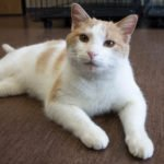 Peninsula Pet of the Week: Luther