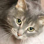 Peninsula Pet of the Week: Anna