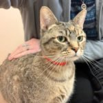 Peninsula Pet of the Week: Mama B