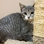 Cat Behavior Tips: Cat Scratching