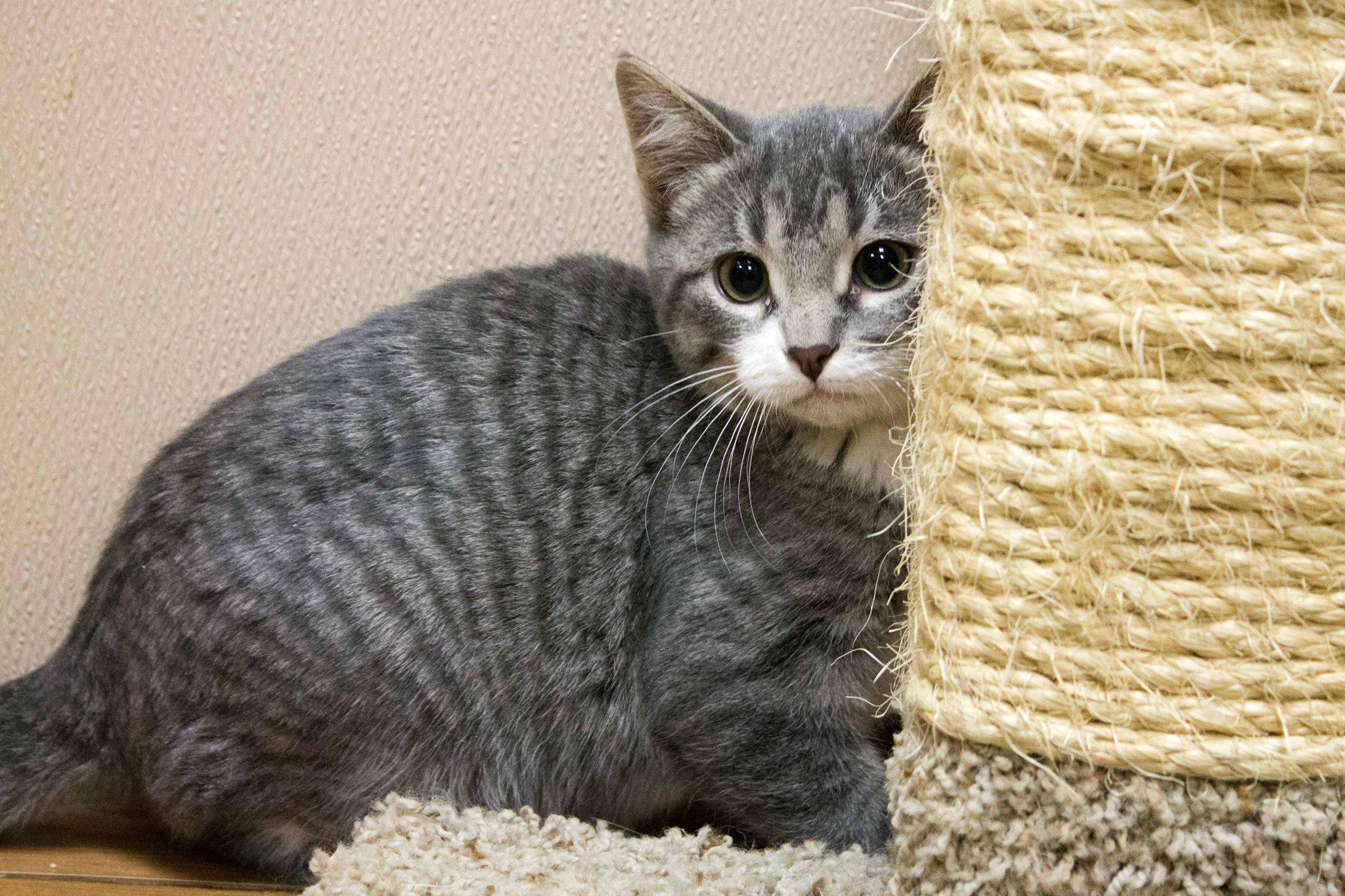 Cat Behavior Tips Cat Scratching Door County Today