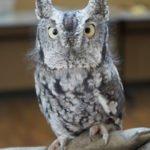 Owl-O-Rama at The Ridges